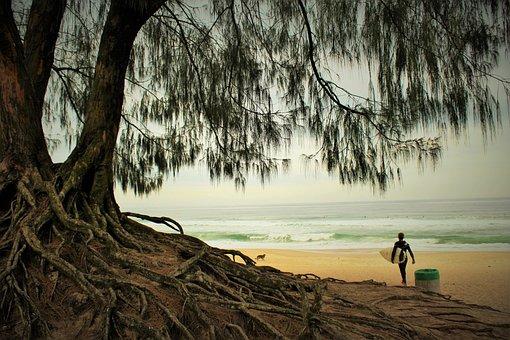 Beach, Surf, Flying, Mar, Wave, Holidays, Sol, Water
