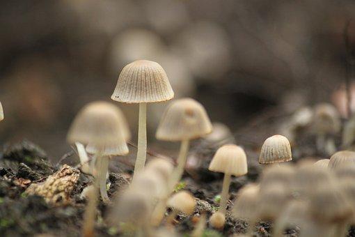 Mushroom, Autumn, Forest, Nature, Small Mushroom, Moist
