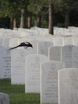 Black-billed Magpie, Magpie, Cemetery, Black-billed