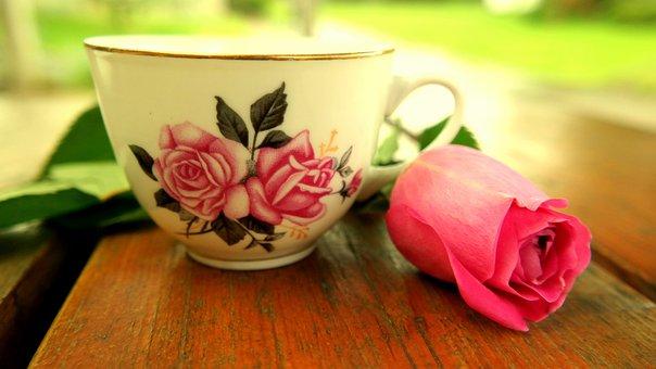 Teacup, Rose, Blossom, Bloom, Pink, Quiet, Teatime, Tee