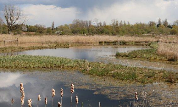 Reedbed, Brandon March, Warwickshire, Nature Reserve