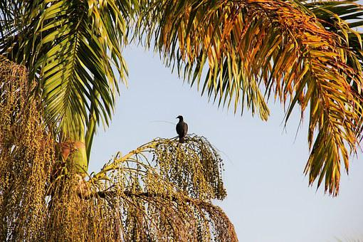 Bird, Palm, Jamaica, Exotic, Gorgeous, Caribbean, Mood