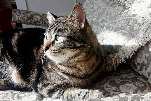 Cat, Kitten, Kitty, Sunshine, Tabby, Peaceful, Glance
