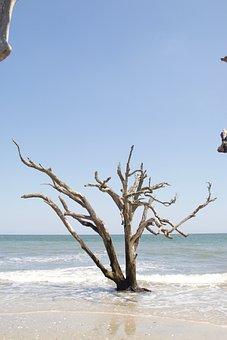 Beach, Edisto, South, Carolina, Salt, Tree, Coast
