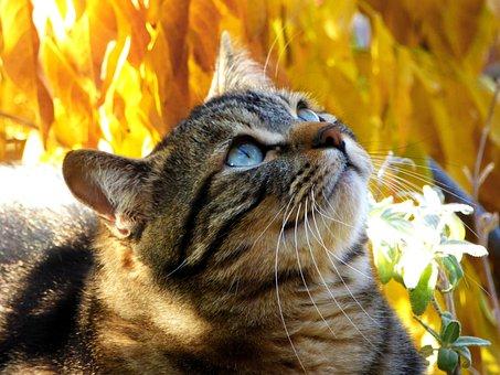 Cat, Tabby, Kitty, Autumn, Leaves, Feline, Kitten