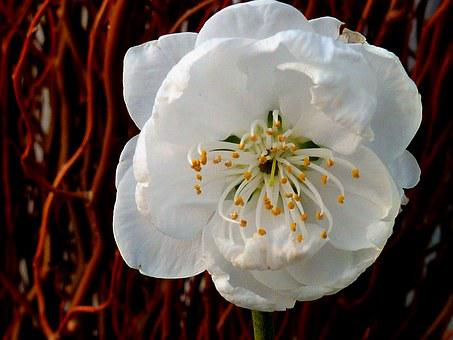 Blossom, Bloom, Spring, Garden, Lenz, March, Wet
