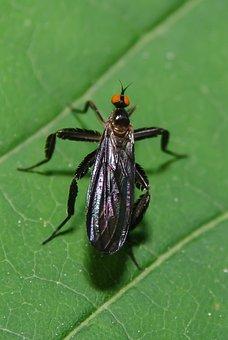 Bug, Plants, Insect, Leaf, Nature, Macro, Zoom, Nikon