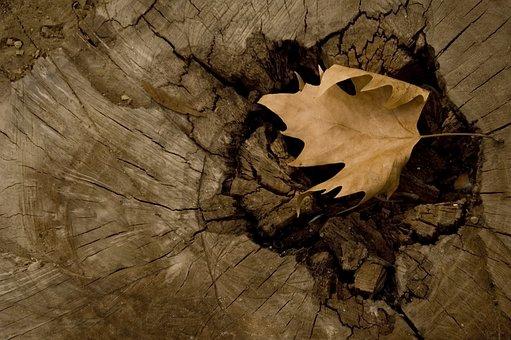 Tree, Yasmin, Brown, Motif, Pattern, Design, Decor
