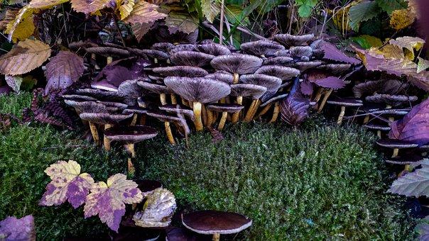 Mushroom, Hat, Lamellar, Mushroom Collector, Screen