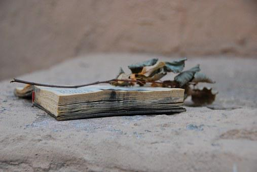 Old Book, Dry Twig, Extra Things