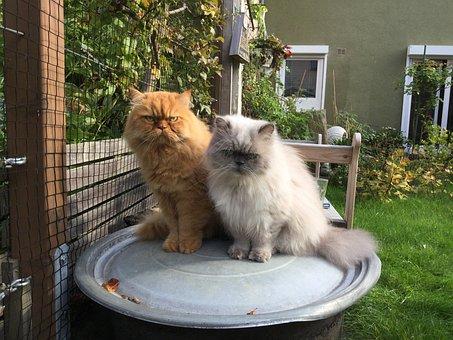 Cat, Felidae, Mieze, Red Tomcat, Garden, Out