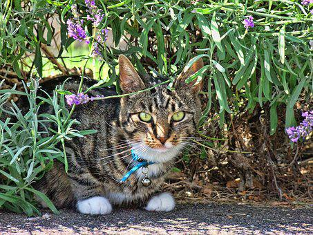 Cat, Tabby, Feline, Kitty, Cute, Pet, Animal, Domestic