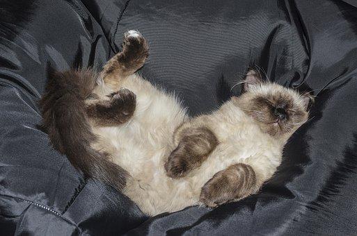 Cat, Kitten, Pets, Tabby Kitten, Is Watching, Lie
