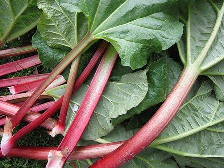 Rhubarb, Leaves, Stengel, Vegetables Rhabarber, Green