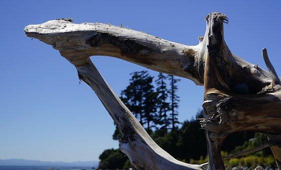 Vancouver Island, Sooke, Driftwood