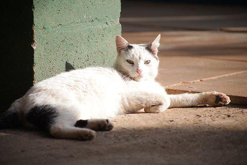 Kitten, Resting, Tabby, Sun, Placing, Outdoors, Cat