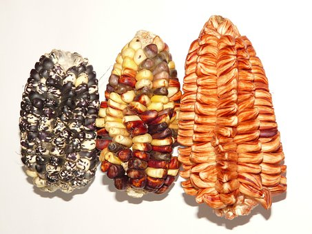 Corn, Cereals, Agriculture, Food, Maize Varieties