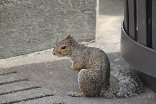 Squirrel, Hunched, Sitting, Cute, Bushy, Tail, Animal