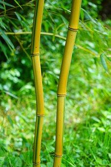 Bamboo, Stalk, Green, Yellow, Woody, Node Bamboo