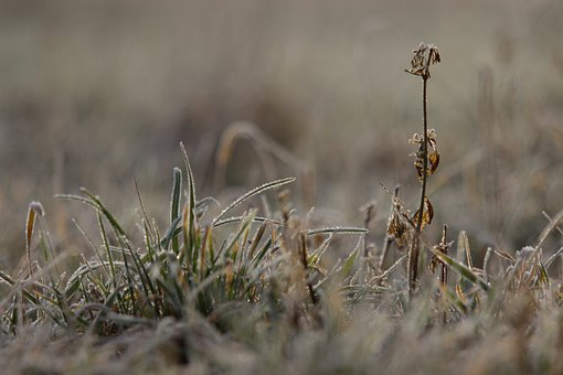 Nature, Canada Goose, Flower, Star, Spider, Birds