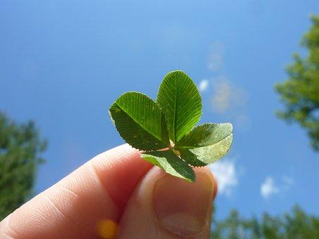 Four Leaf Clover, Clover, Nature, Leafed, Leaf