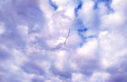 Geese, Sky, Clouds, Flying, Nature, Bird, Flight, Goose