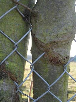 Tree, Fence, Ingrowing, Bark, Overgrown, Wire, Nature