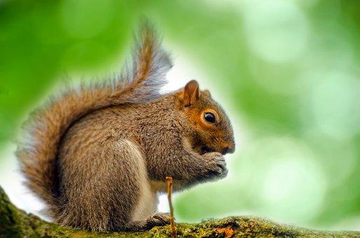 Animal, Squirrel, Tree, Mammal, Paw, Tail, Close-up
