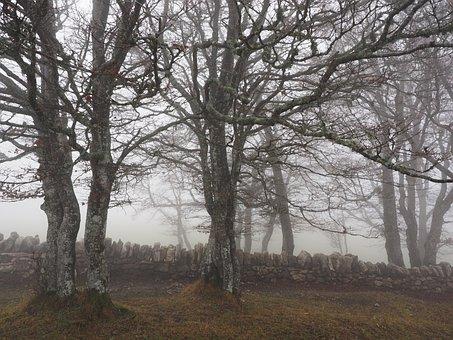 Beech Wood, Fog, Forest, Trees, Tree Trunks, Book