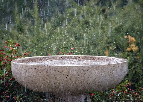 Rain, Rainfall, Wet, Splash, Weather, Birdbath, Shower