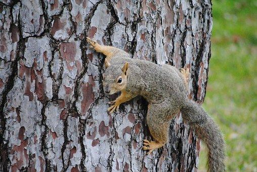 Squirrel, Crawl, Wild, Animal, Wildlife, Cute, Nature