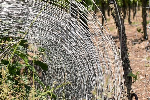 Wire Mesh, Fence, Metal, Limit, Role, Wine, Winegrowing