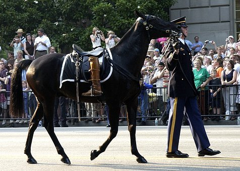 Horse, Riderless, Boots Turned Backwards, Procession
