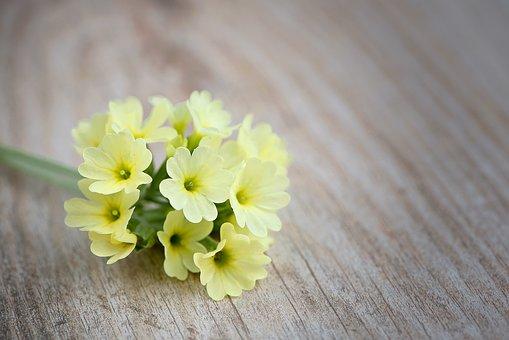 Cowslip, Flower, Flowers, Yellow Flowers