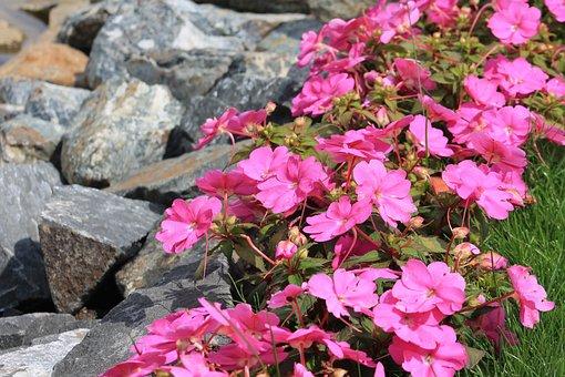 Minieuroland, Klodzko, Flowers