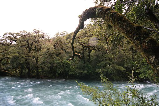 River, Rapids, Trees, Outdoors, Flow, Stream, Forest