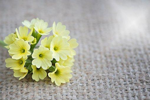 Cowslip, Flower, Flowers, Yellow Flowers, Yellow