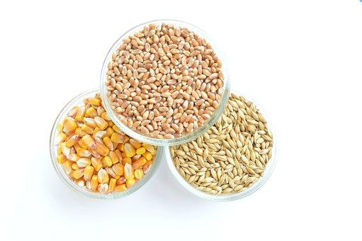 Corn, Wheat, Barley