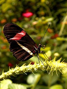 Postman, Butterfly, Lands