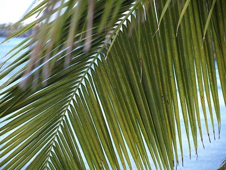 Palm Fronds, James, Light Green, Leaves, Fan Shaped