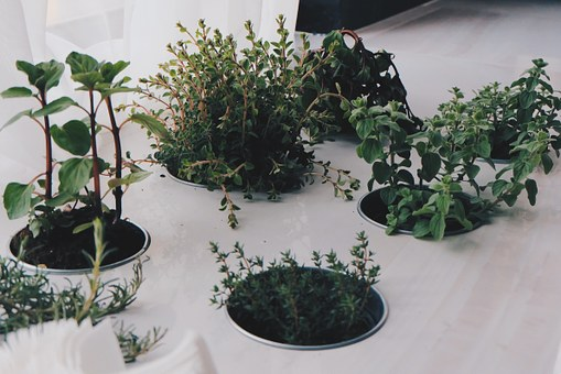 Plants, Herbs, Natural, Green, Fresh, Organic, Healthy