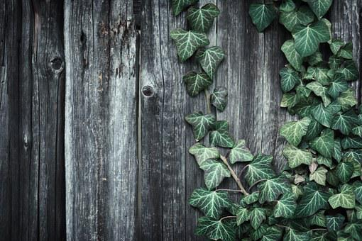 Tree, Cardboard, Ivy, Plant, Grow Up, Rustic