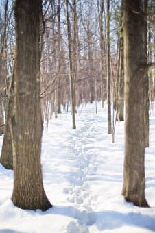 Winter, Trail Through Snow, Woods, Forest, Nature
