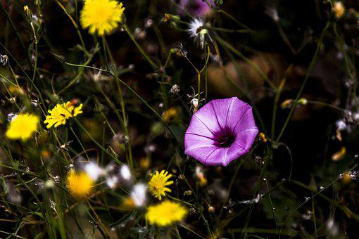 Flores, Flower, Nature, Summer, Field, Outdoors, Grass