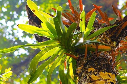 Plant, Tree, Fern, Green, Nature, Environment, Summer