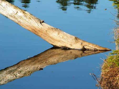 Tree Trunk In The Water, Tree, Water, Dead Tree, Log