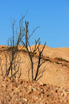 Australia, Outback, Landscape, Nature, Bush, Travel