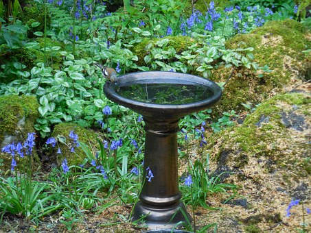 Bird, Birdbath, Garden, Water, Wildlife, Outdoors