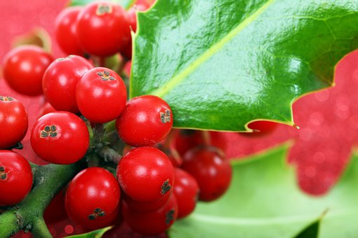 Berry, Christmas, Decoration, Green, Holly, Macro, Red