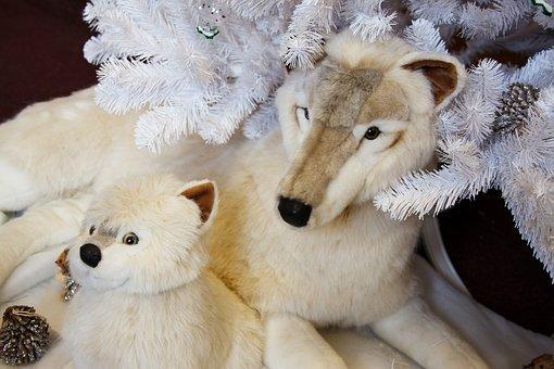 Adorable, Animal, Arctic, Beautiful, Christmas, Cute